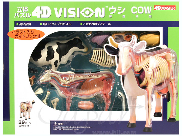 4d Vision Cow Anatomy Model By Aoshima Hobbylink Japan