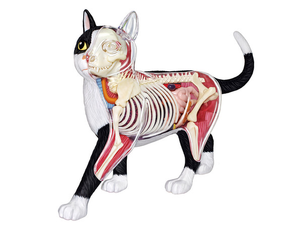 4D Vision Cat Black : White Anatomy Model by Aoshima | HobbyLink Japan